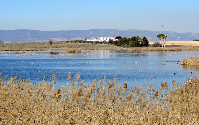 Aves en la laguna de Navaseca