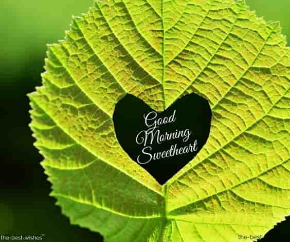 awesome good morning photo with leaf heart