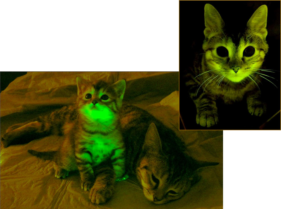 SNOMNH Recent Invertebrates: Green-glowing cats and jellyfish