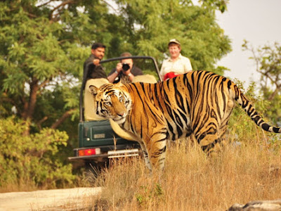 Private Same Day Trip to Ranthambore National Park with Afternoon Safari