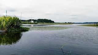 印旛沼(いんばぬま)千葉県