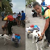 Loyal dogs in the Philippines helps their disabled owner earn a living during pandemic