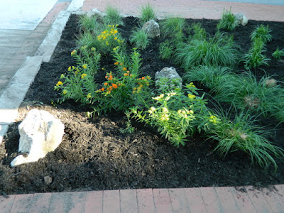 Midtown Avenue Road Summer Front Garden Cleanup After by Paul Jung Gardening Services Inc.--a Toronto Gardening Company