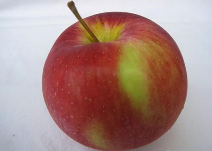jenis apel prima dan manfaatnya, manfaat apel, manfaat apel merah, manfaat apel untuk ibu hamil, manfaat apel malang, manfaat apel fuji, manfaat apel dan kayu manis, manfaat apel rebus, manfaat apel untuk diet, manfaat apel india