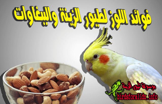 فوائد اللوز العظيمة لطيور الزينة والببغاوات