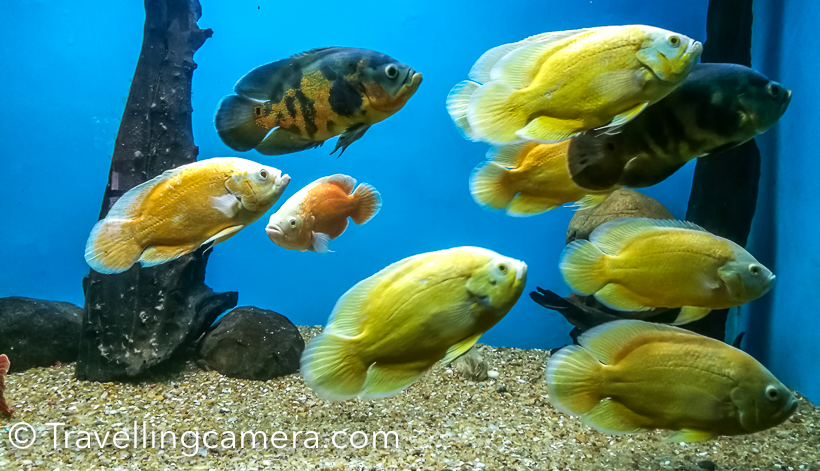 This aquarium is located very close to the Cubbon park the entry ticket is about 5 rs per person, I think. That's almost free in city like Banglore in 2018. This is very good place if you are accompanying kids. Check out the blogpost below to know more about this aquarium.