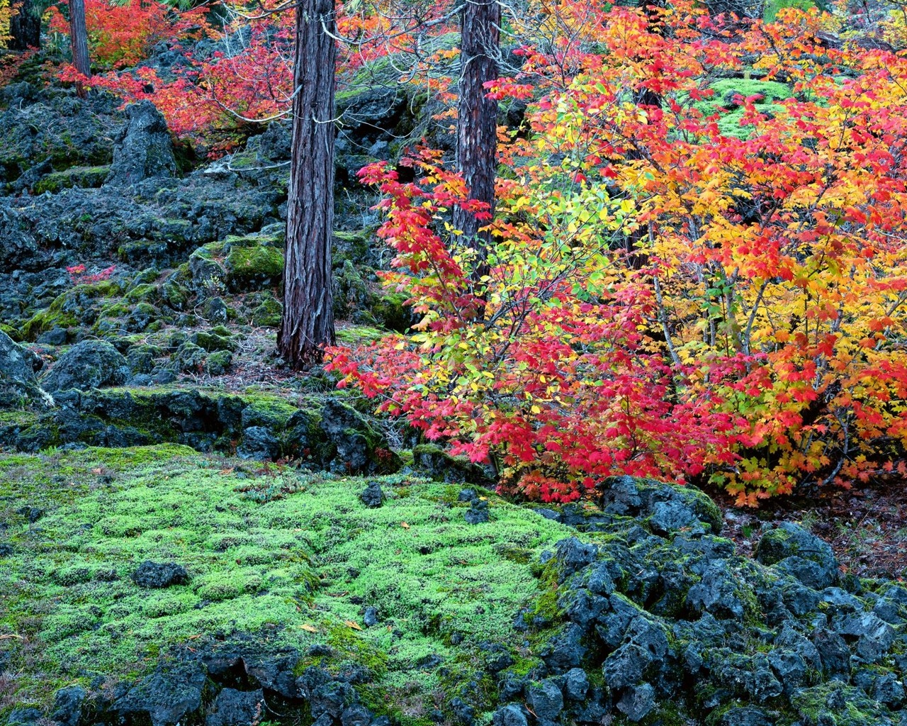 Wallpaper And Image: 40 Beautiful Autumn Wallpapers 1280 X