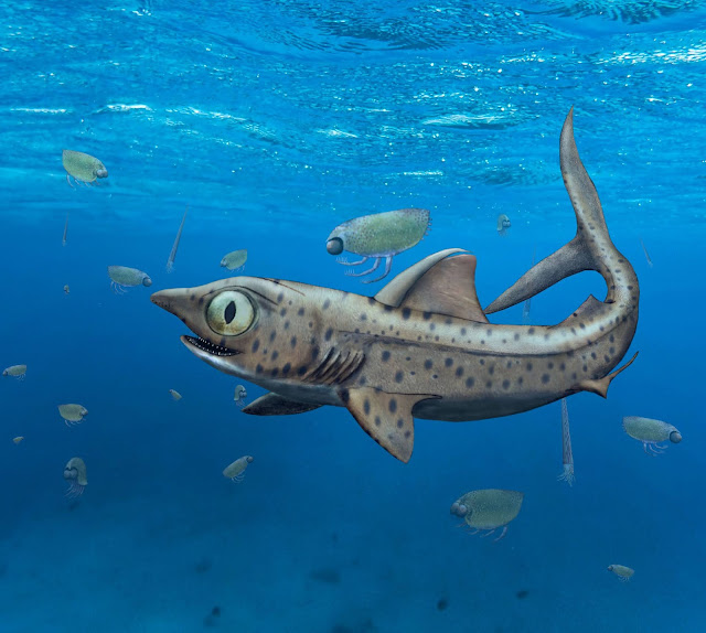 Prehistoric shark hid its largest teeth