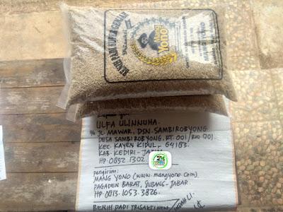 Benih padi yang dibeli    ULFA ULINNUHA Kediri, Jatim. (Sebelum packing karung ).