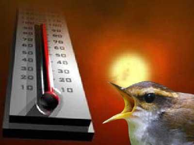 Cara Menangani Burung Yang Stres dan Macet Bunyi !