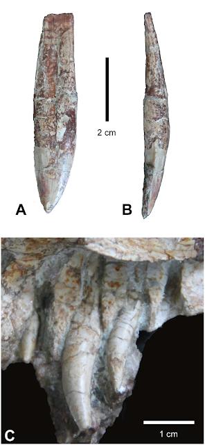 The first crocodile ancestors
