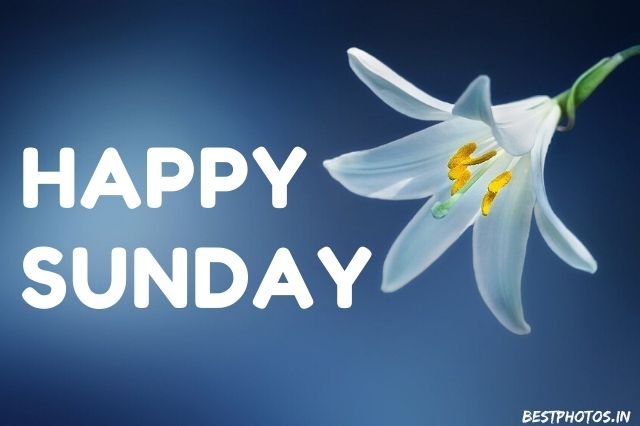 Happy Sunday With Flowers Download