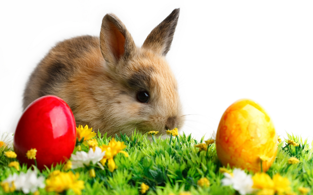 Free download easter 2013 hd wallpapers for android - Easter bunny wallpaper ...