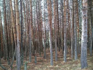 blog-de-poesia-miguel-angel-cervantes-bosque