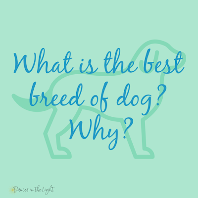 What is the best breed of dog? Why?