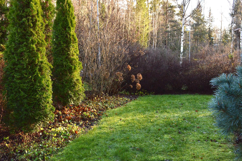 marraskuun-puutarha
