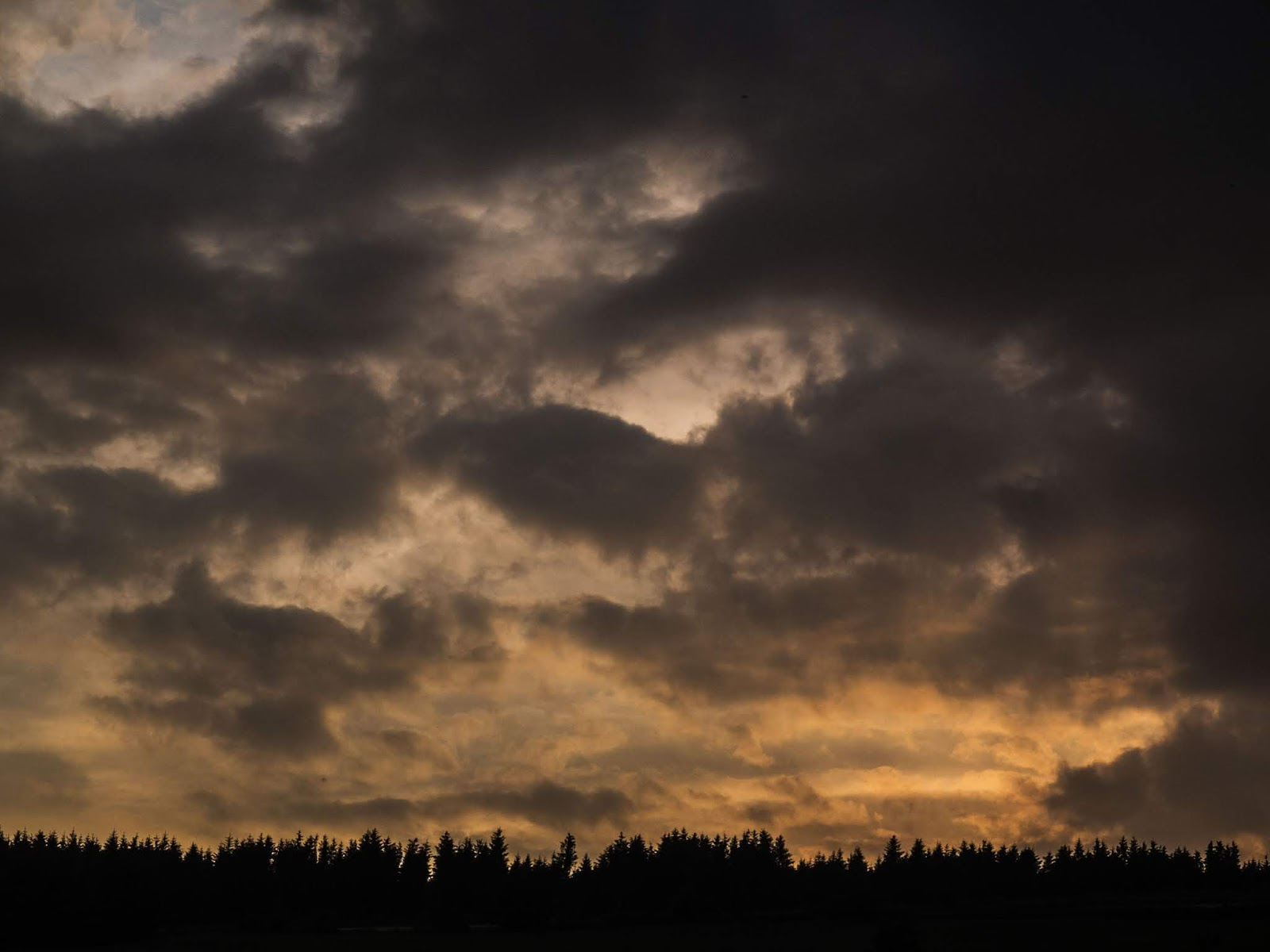 Dark grey clouds hovering over a yellow sunset over a conifer forestry.