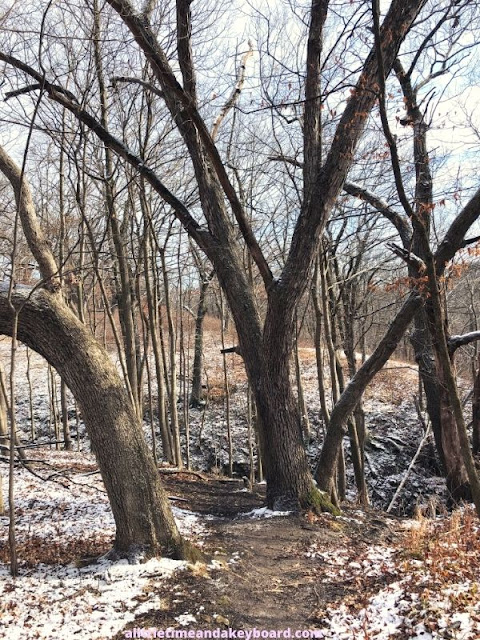 Powdery snow dusted the forest at Kishwaukee Gorge North Forest Preserve