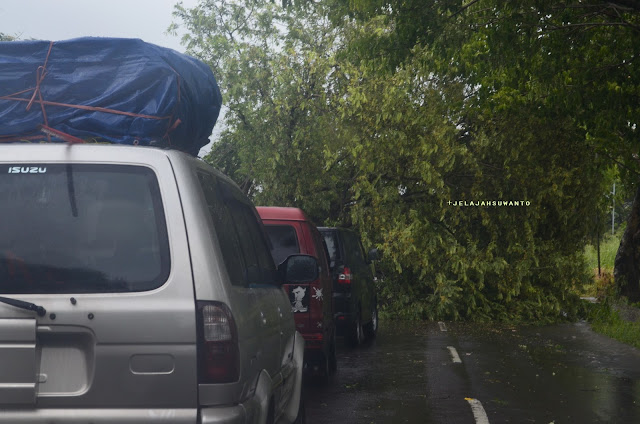 Pohon tumbang di ruas Sidrap, jelajah Tana Toraja || JelajahSuwanto