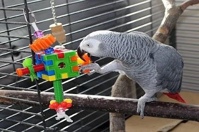 ألعاب الطيور