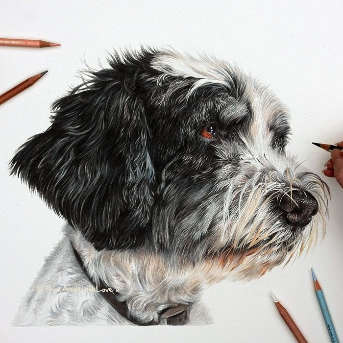 11-Miah-Polish-Lowland-Sheepdog-Angie-Cats-Dogs-and-an-Owl-Pencil-Drawings-www-designstack-co