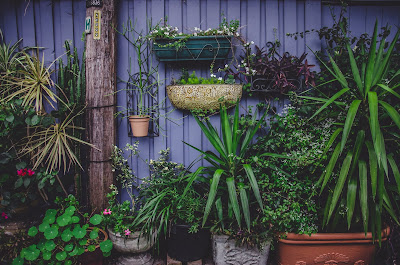 Découvrir - Jardin d'Ortho