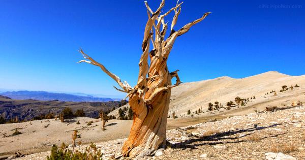 Cara Mengetahui Usia Pohon