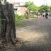 Saksi Mata: 7 Pemotor Celaka Akibat Pohon 'Maut' di Jl Setail Surabaya