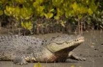 10 sentences on Crocodile in English