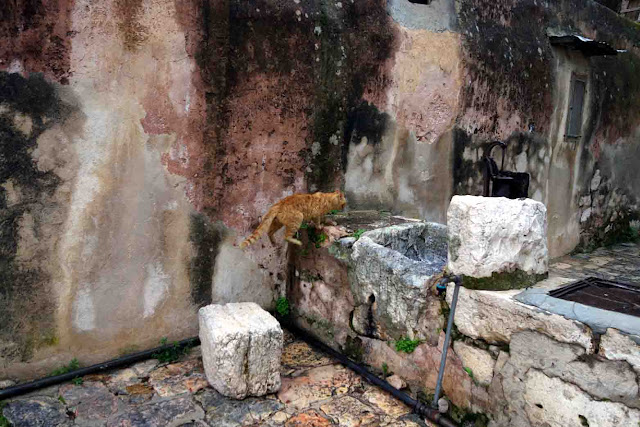 chat  Monastère Deir es-Sultan