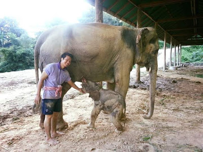Chiang Mai Day Tours to Maesa Elephant Camp