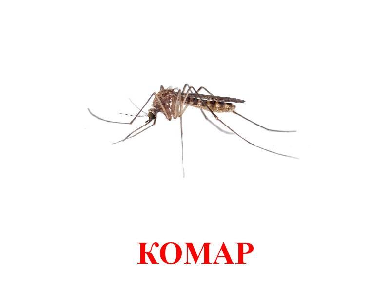 ассоциации картинка комара и жука были двух лодках