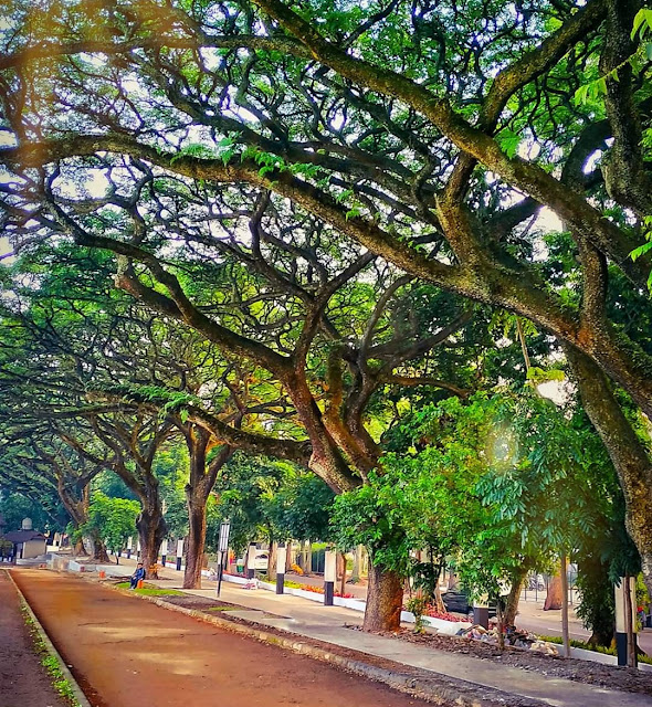 ciptakan hutan kecil di lingkungan kita