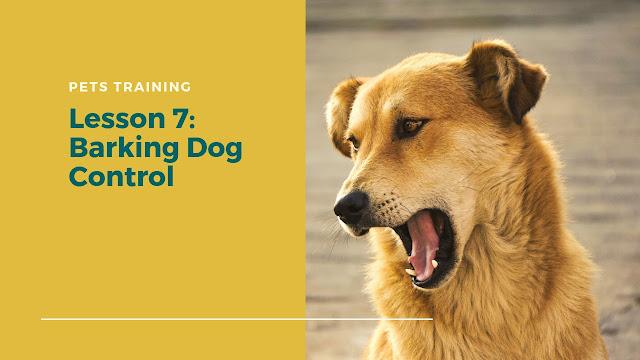Barking Dog Control