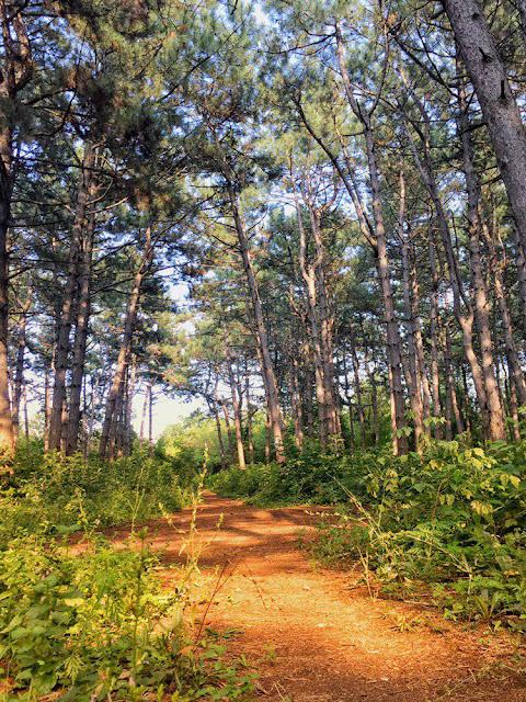 Щепкинский-лес