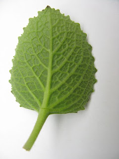 Ova Leaf 3D Image