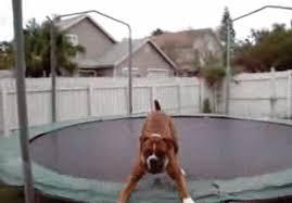 cães no trampolim