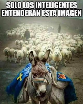 Solo los inteligentes entenderán esta imagen, ase, català, borregos, ovelles