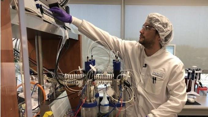 Cientistas poderão desenvolver vacina anti-coronavírus em curto prazo