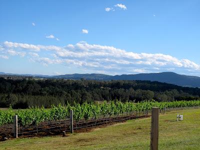 Stop à la hunter valley pour visiter les vignobles et déguster les vins australiens