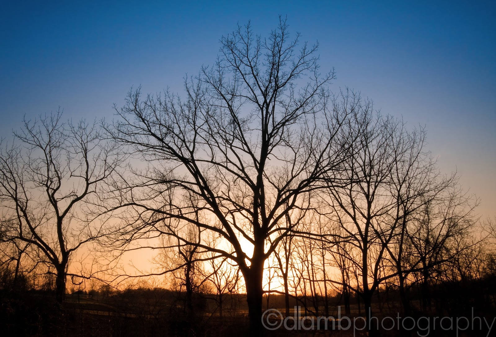 http://david-lamb.artistwebsites.com/featured/winter-trees-at-dusk-david-lamb.html