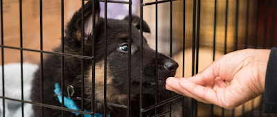 Puppy feels punished and barks in crate at night