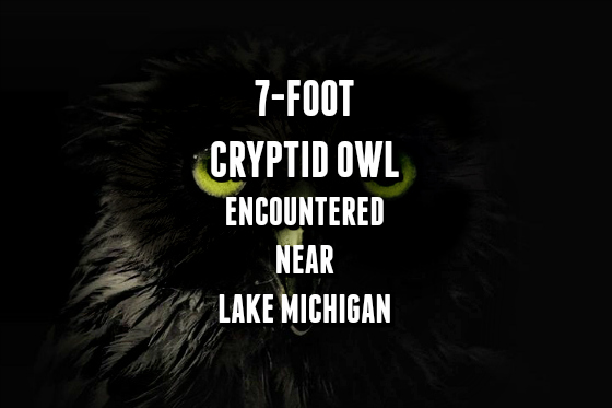 7-Foot Cryptid Owl Encountered Near Lake Michigan