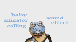 learn alligator animal sound