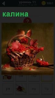 В корзине набрана ягода калина с листьями. Вокруг разбросаны красные ягоды