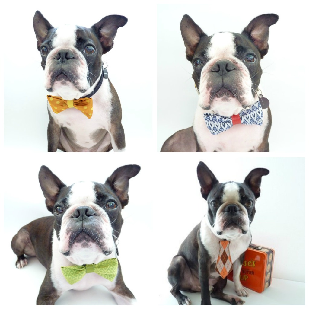 Top Terrier Bow Adorable Dog - bow%2Bties%2Bfor%2Bdogs  Picture_19646  .jpg