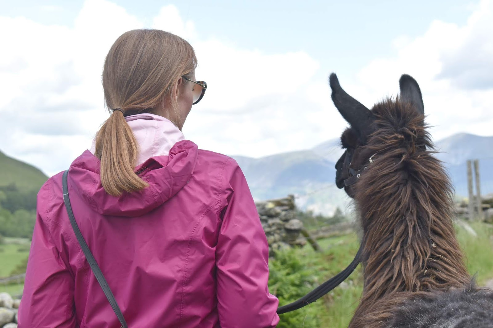 Once Upon a Llama - Llama Trekking