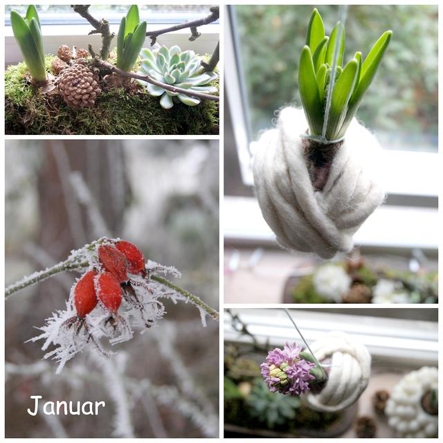 Eingefilzte Hyazinthen und Frost im Garten