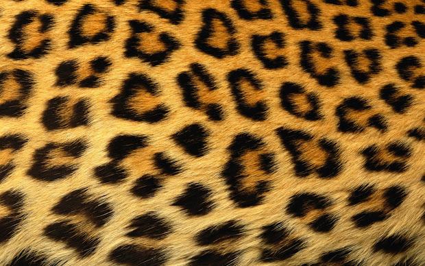 Mess With Man Wearin Leopard Skin. American