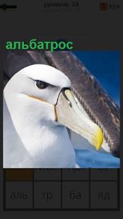 1100 слов птица альбатрос с крепким клювом 38 уровень
